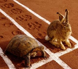 Sprint kontra maraton